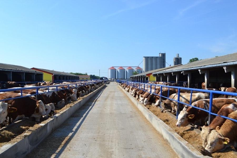Izgradnja poljoprivrednih objekata 1